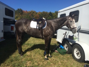 Anxious about something? Try it on a five year old Thoroughbred.